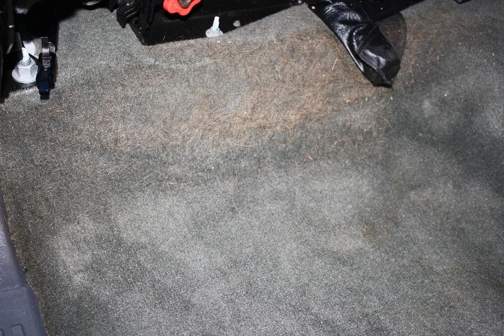Pet Hair on Vehicle Carpet